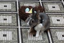 The Mayfair Bunny / Gracie