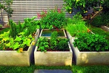 Gardening / by Brandi Morgan