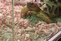 Schildpad / turtle