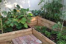 Growing your own vegetables / Ideas for how to make growing your own vegetables easier and attractive. Especially desert gardening and urban gardening here in Dubai