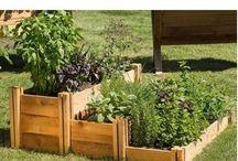 Fiori piante e giardino