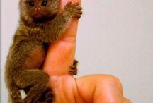 fur babies. / by Tiffany Gehrig