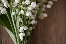 Flowers / Bunches and Arrangements  Just beauty tided with string or ribbon or even maybe in a vase