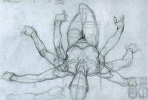 anatomy - female