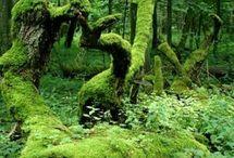Forêt (vert) / «On dit souvent que les arbres nous empêchent de voir la forêt : il est tout aussi juste de dire qu'on ne voit pas les arbres à cause de la forêt.»  (Llya Ehrenbourg)