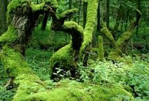 foresty Stuff