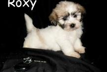 New puppy:)  / by Alex Atteberry
