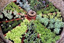 Herb Garden / by Sylvia