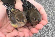 Foto - Ptáci