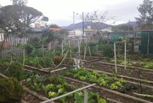 Renovation on homestead garden / Renovation