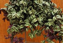 (Garden) Indoor Plants