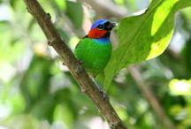 Pássaros / Pássaros livres na Serra de Guaramiranga - Ce Imagens Protegidas por Lei.