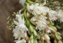 Tuberose Bouquet