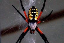 pavouci, spider