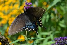 Flowers and Butterflies / Some colorful sights from nature