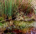 Biotope / Biotope, birds feeds, natural pools