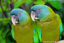 My Wonder Zoo : Rio ! / perrots, macaw ...