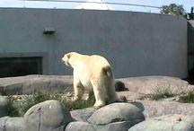 Zoos in Denmark / Zoo'er i Danmark