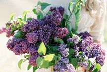 Purple Wedding Inspiration / Purple Wedding Inspiration and Ideas