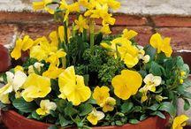 Planten - bloemen tips