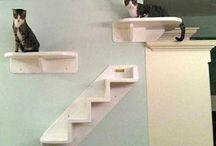 Cat Shelves / Cat shelves