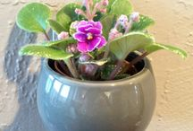 Magnetized Trendy Ceramic Planters with Live Plants / Modern magnetic pots. Patented magnetized design allows each pot to attach to any metal surface.