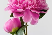 Beautiful flowers / by Clover Johnson-Cavins