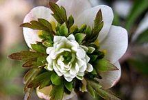 Green fingers -  Flowers