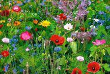 Blomster // Flowers / Til min fremtidige have...