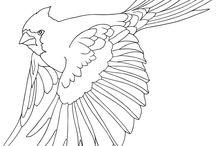 раскраски - птички