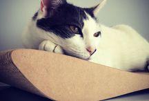 Purrfecte Katzen-Stimmung / So wohlig, so kuschelig - den Samtpfoten gefällts!