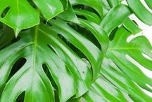 < plantes >