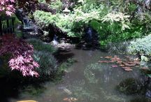 Japanese Garden Inspiration / Japanese Gardens