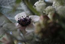 Blackish flowers