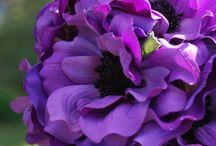 Fleurs / by Anita Forbish