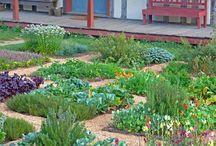 front yard veggie gardens / by Lissa Bitton
