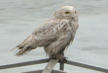 Birding in Somerset County, NJ
