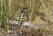 Snakes & Reptiles UK
