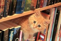 :: library friends :: / Animals/pets / by Pam Harland