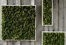 ściany z mchu / moss walls