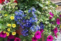 цветы кашпо
