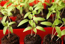 zahrada a pěstování