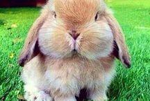 Duri's friends (rabbits)