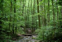 Chatthoochee National Forest
