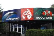 Vancouver Aquarium / by Jamie Munro