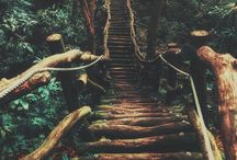 Savannah Huntress (Mage Tree Series)