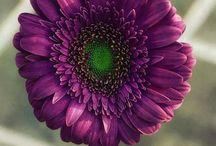 Purple my World_♡