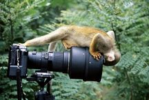 Photography - the best in the world / From various sources and competition winners.  Look and be inspired.