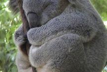 Koala stuff