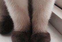 Paw-paw